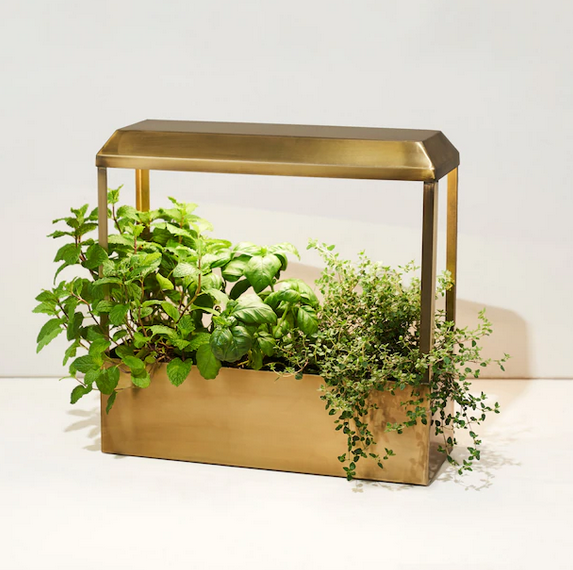 Modern Sprout Smart Growhouse Brass